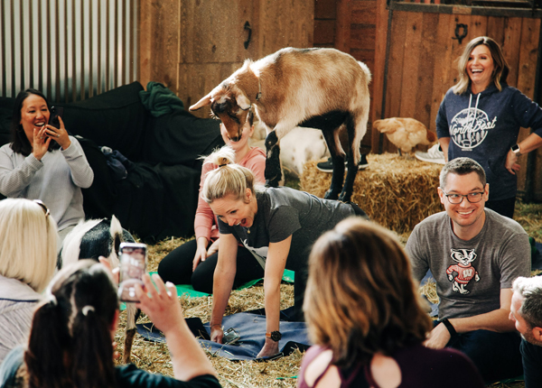 heartspark goat yoga Adventure
